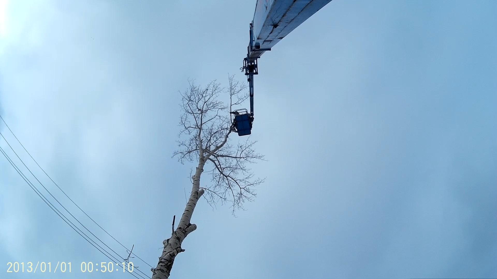 спиливание дерева в Рязанской области