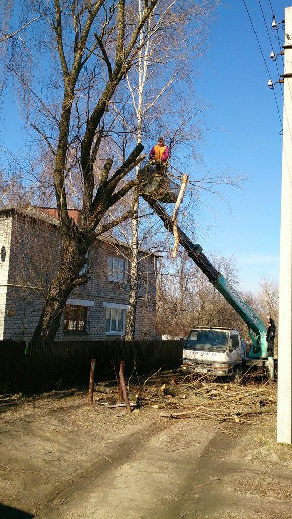 Спиливание дерева в Шилово