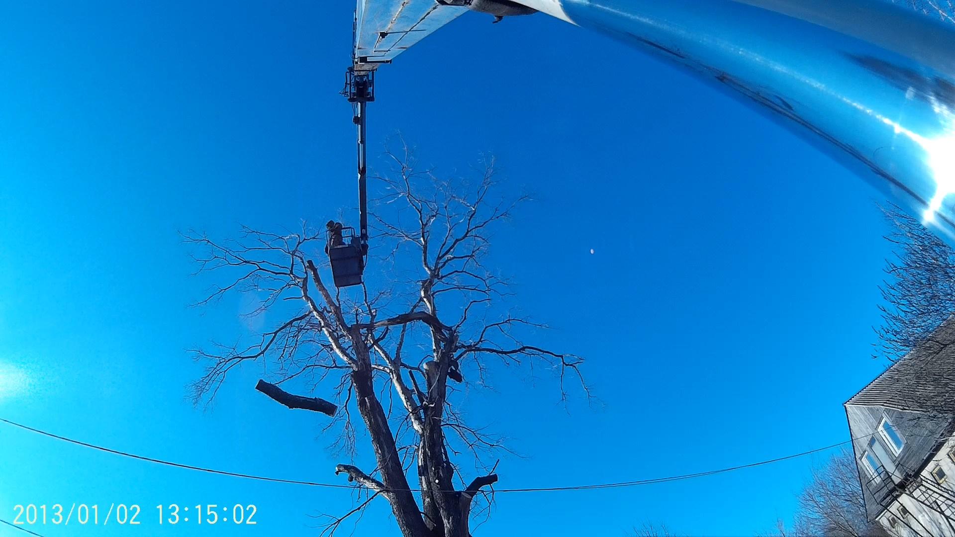 спиливание дерева в Сараях