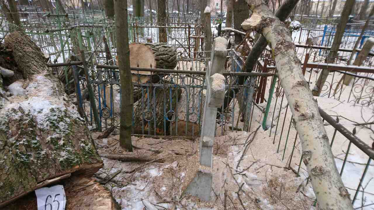 спиленное дерево на кладбище во Владимире