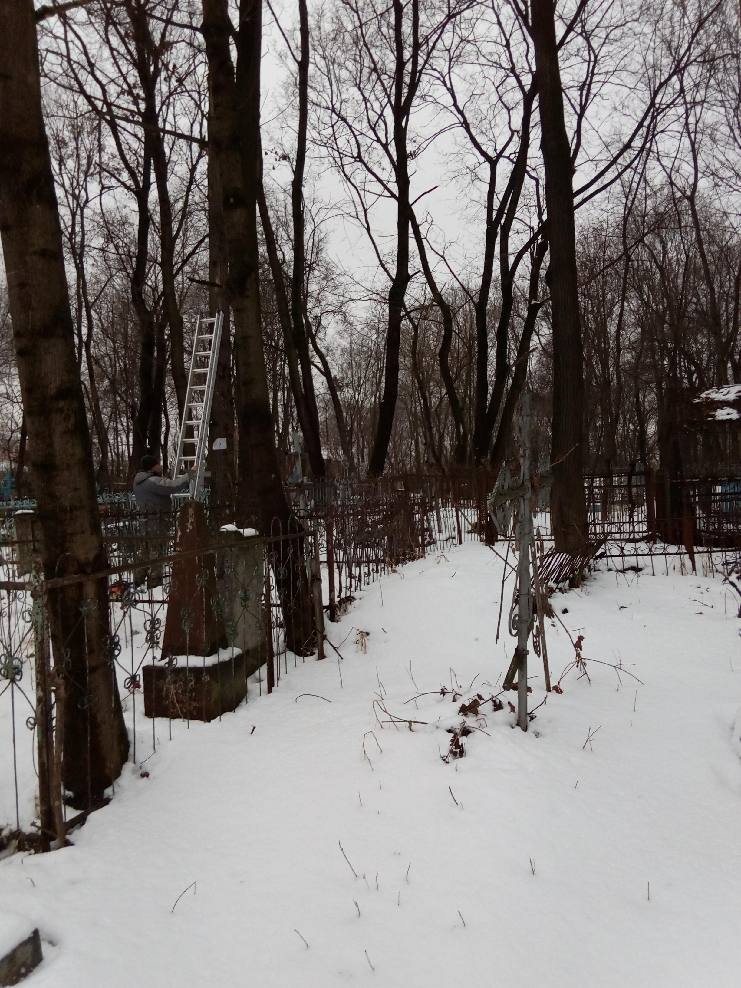 спиливание дерева на кладбище