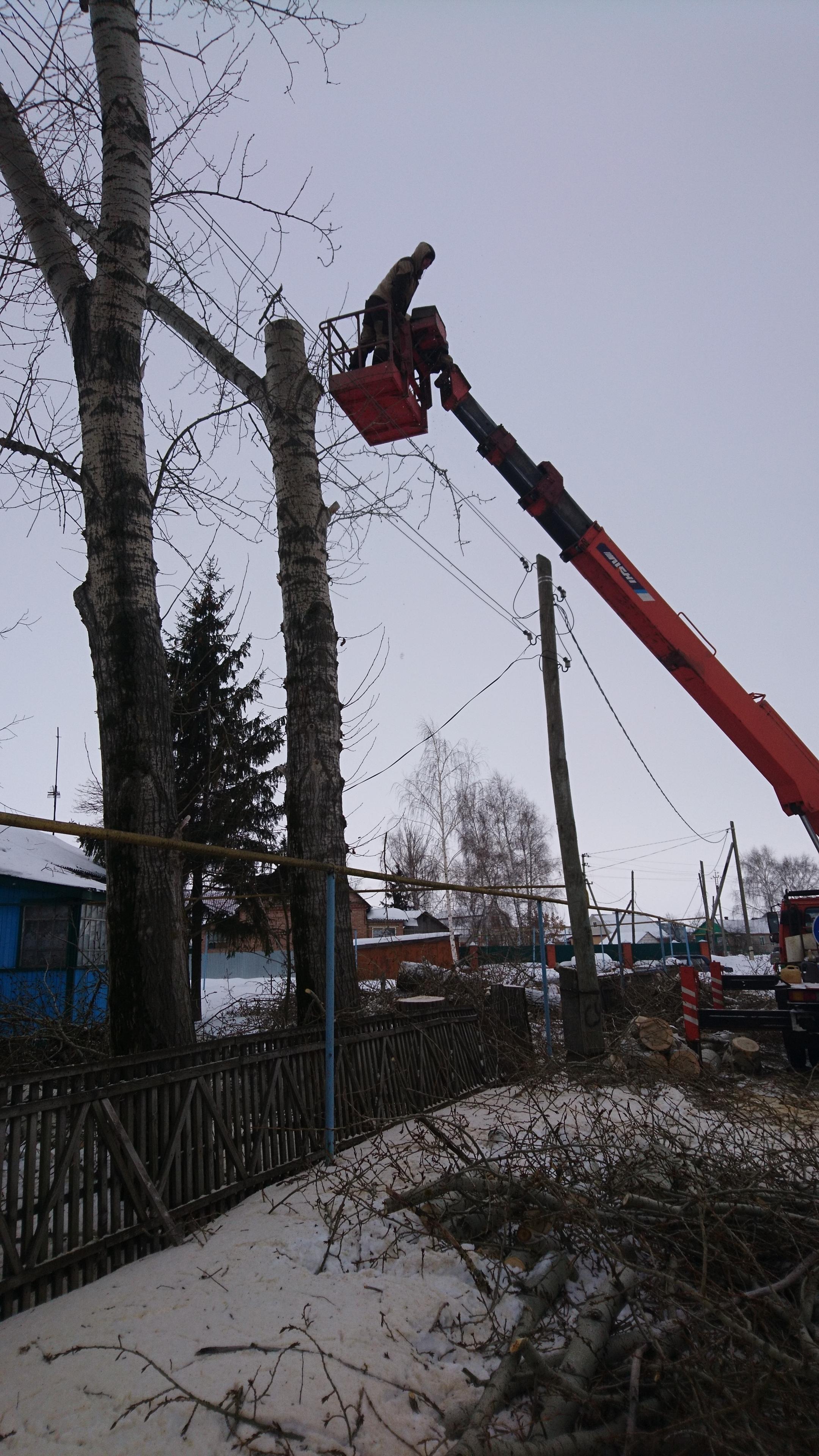 Спил деревьев в Щетиновке