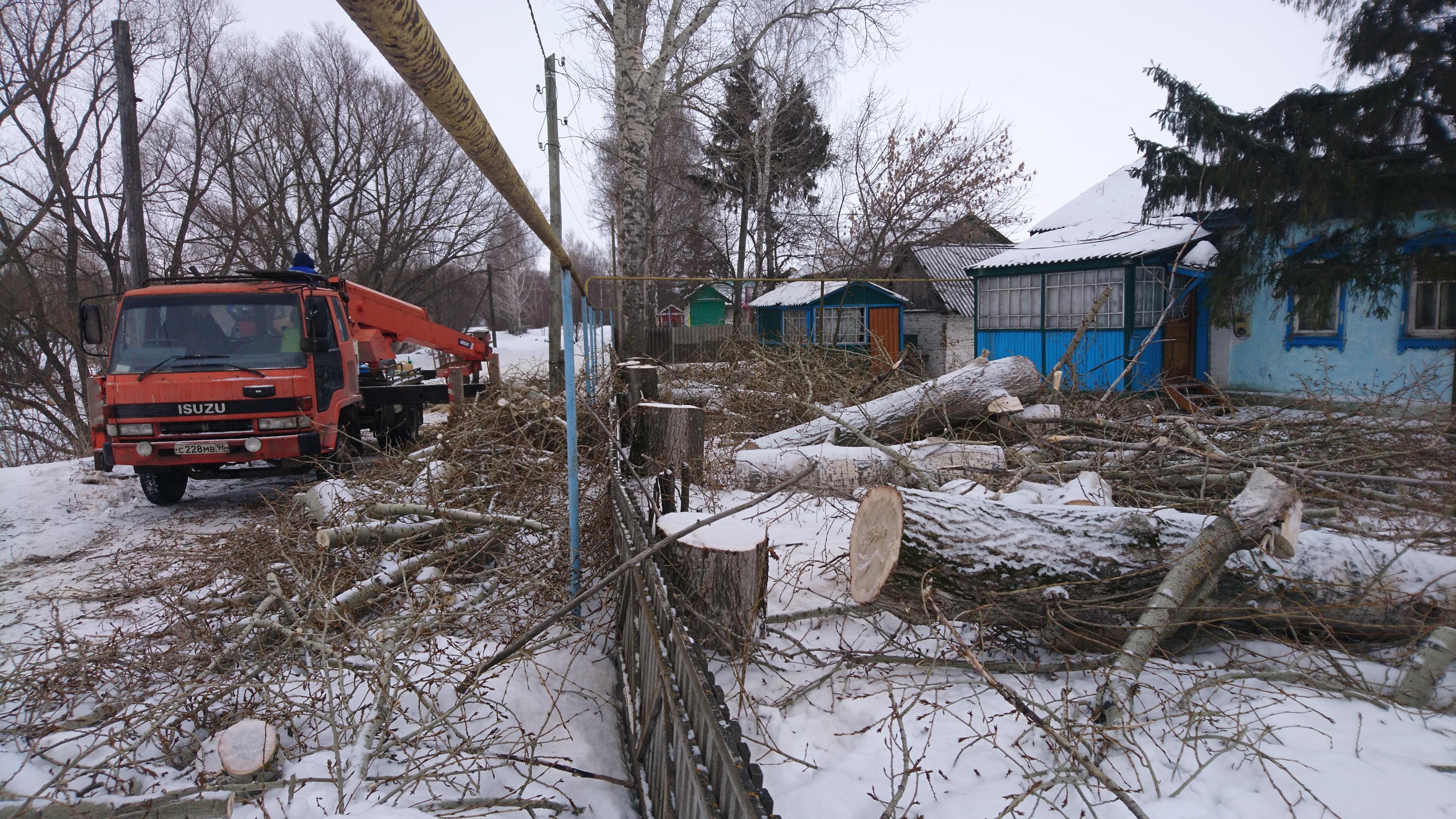 Вырубка деревьев в Щетиновке