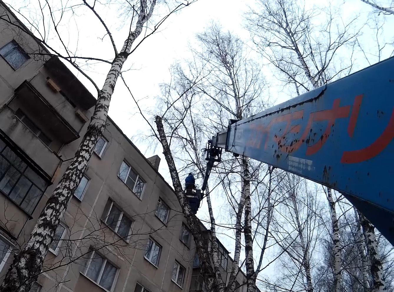 Спиливание дерева рядом с пятиэтажкой