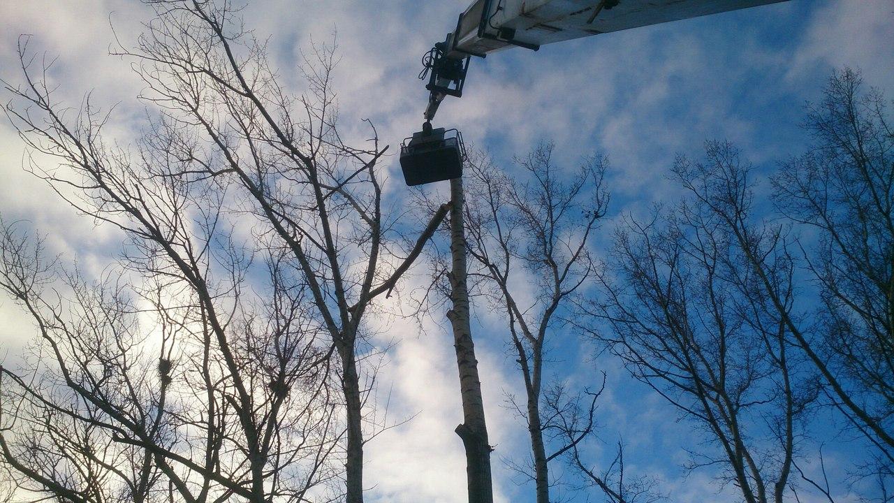 Спил деревьев в Сасово