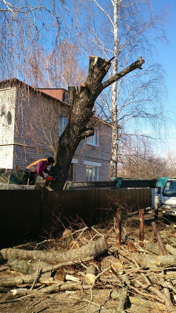Валка дерева в Шилово