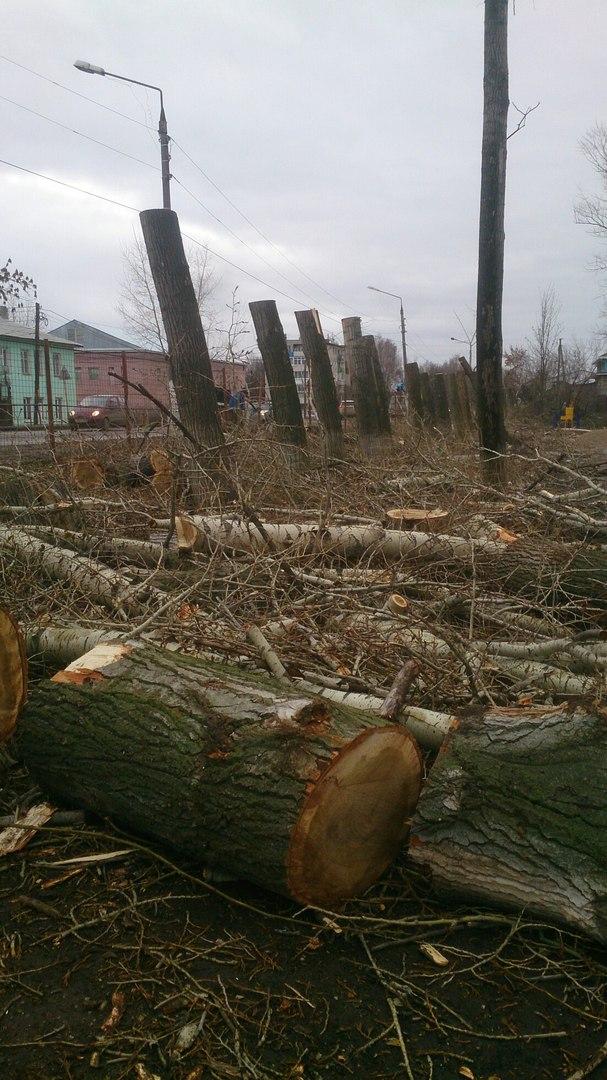 Деревья после кронирования