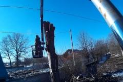 Спиливание деревьев любой сложности