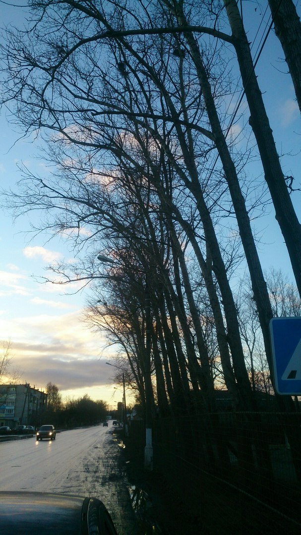 Спиливание тополей в Михайлове