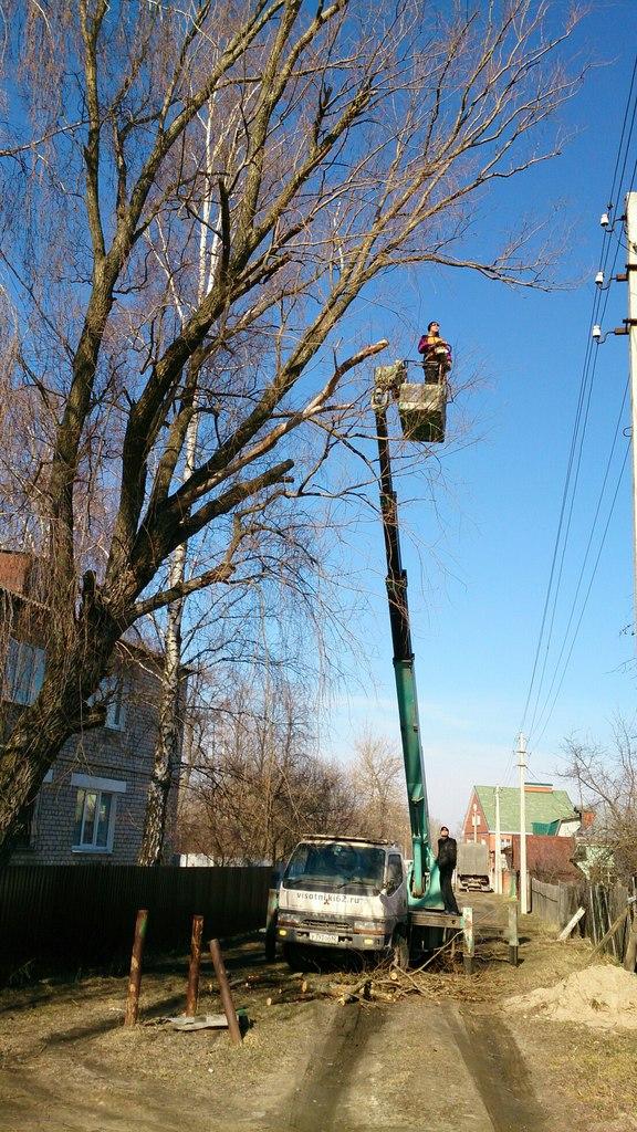 Спил дерева в Шилово