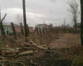 валка деревьев у дороги